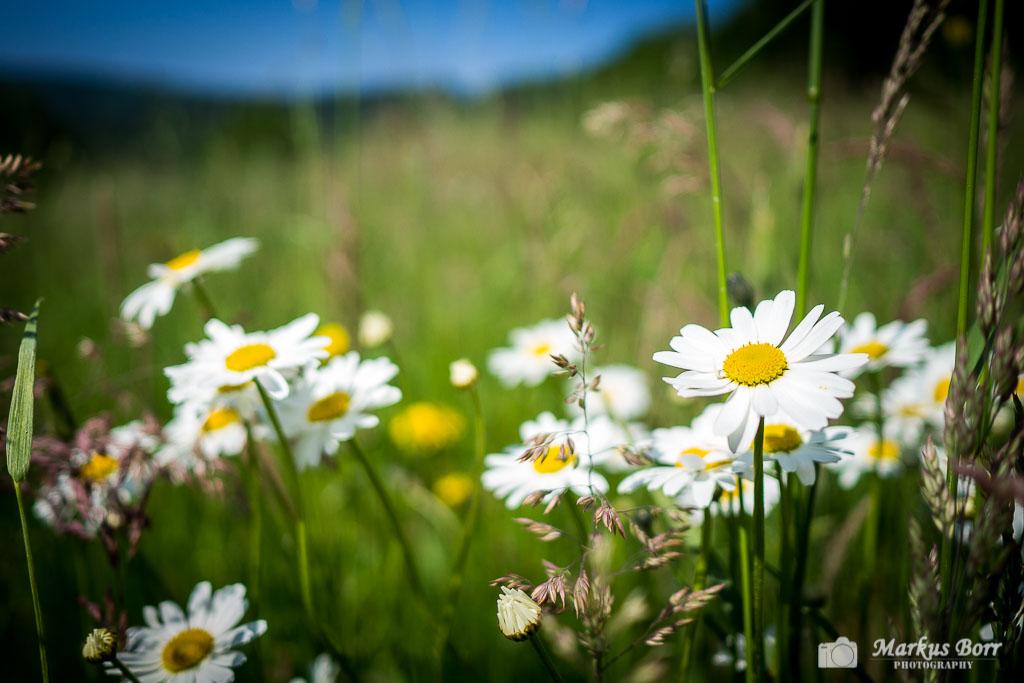 Blumen auf dem Schluchtenpfad