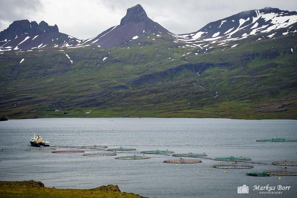 Fischzucht in den Ostfjorden