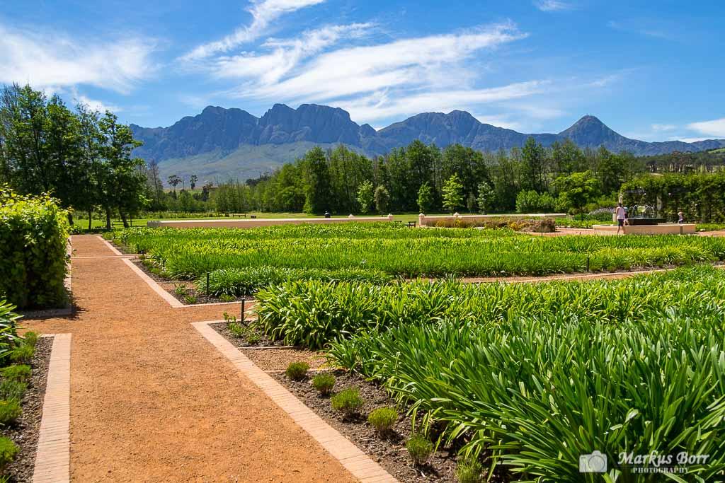 Gartenanlage im Weingut Vergelegen