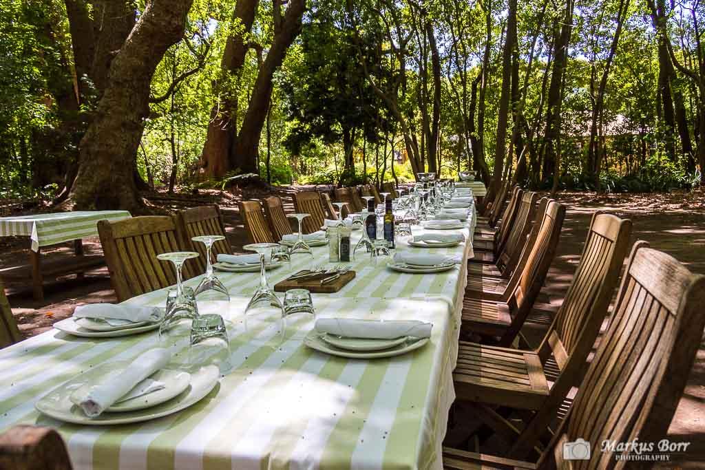 Picknick im Weingut Vergelegen