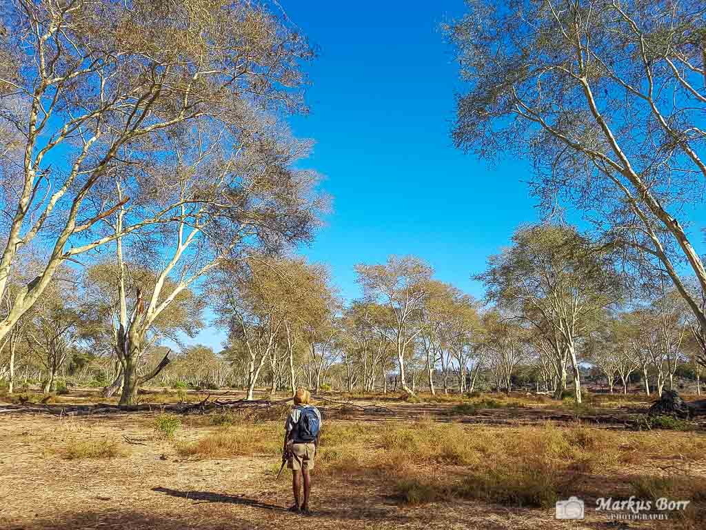 Bushwalk Pafuri Camp