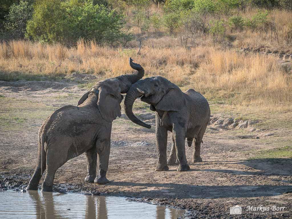 Mabula Reserve Elefant