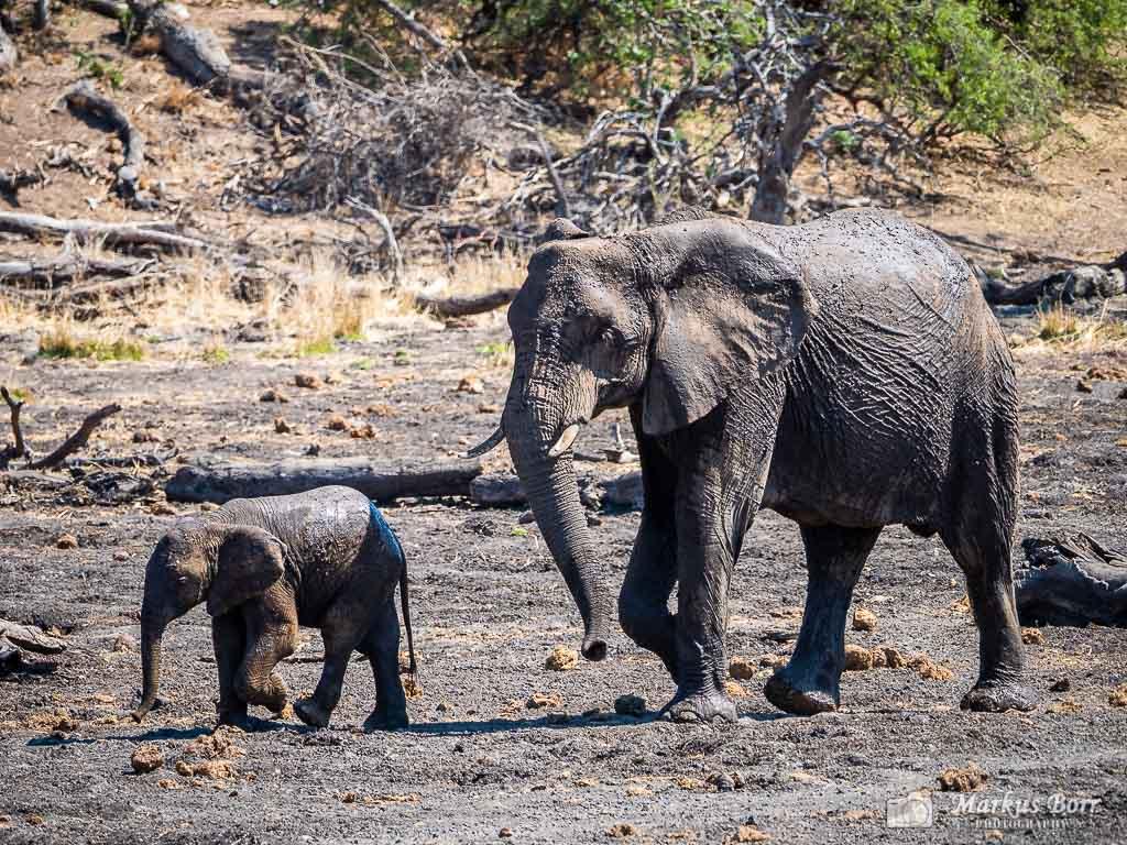 Elefanten im Mapungubwe