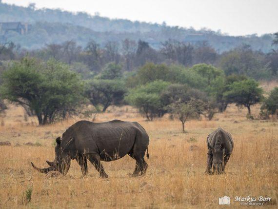 Mabula Reserve